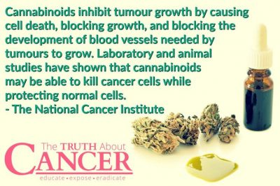 does cbd cure cancer