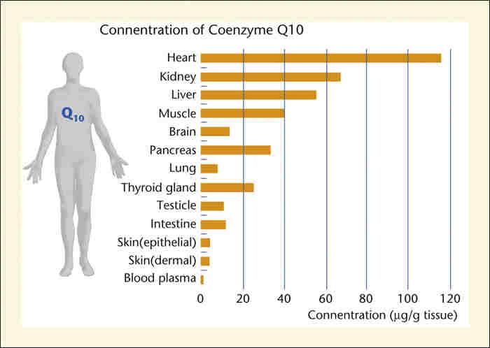coenzyme q10 supplement