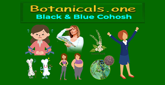 Black Cohosh Supplement