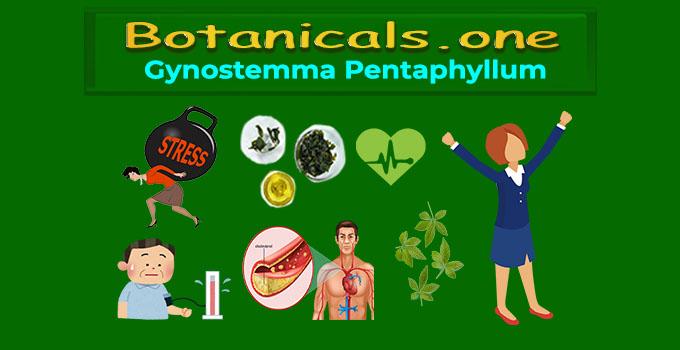 gynostemma pentaphyllum leaf extract