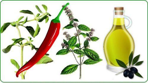 best oil of oregano capsules