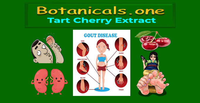 tart cherry extract for gout