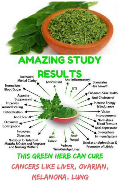 Benefits of Moringa Leaf Powder
