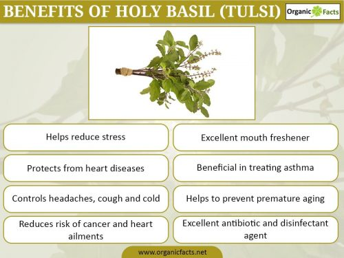 Benefits of Tulsi