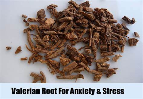 valerian root for stress