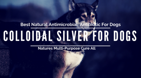 Colloidal Silver for Cats