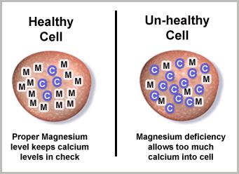 magnesium vs calcium ratio